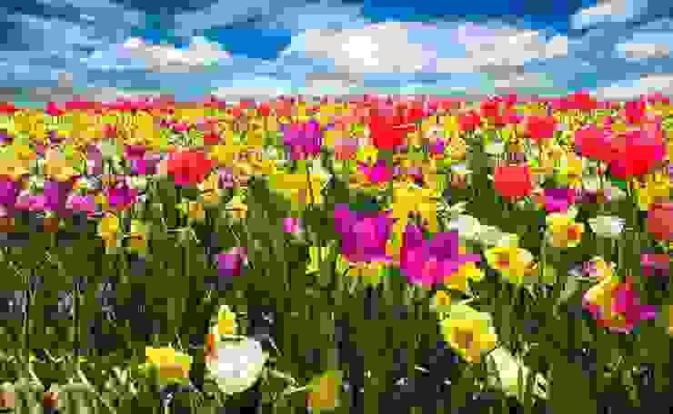 Garten press profile homify GartenPflanzen und Blumen