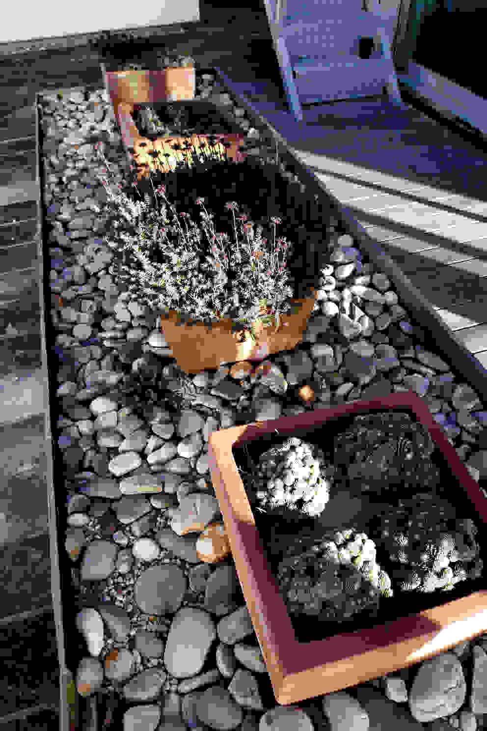 Jardins modernos por RUTH GUNDÍN VILLAR Moderno