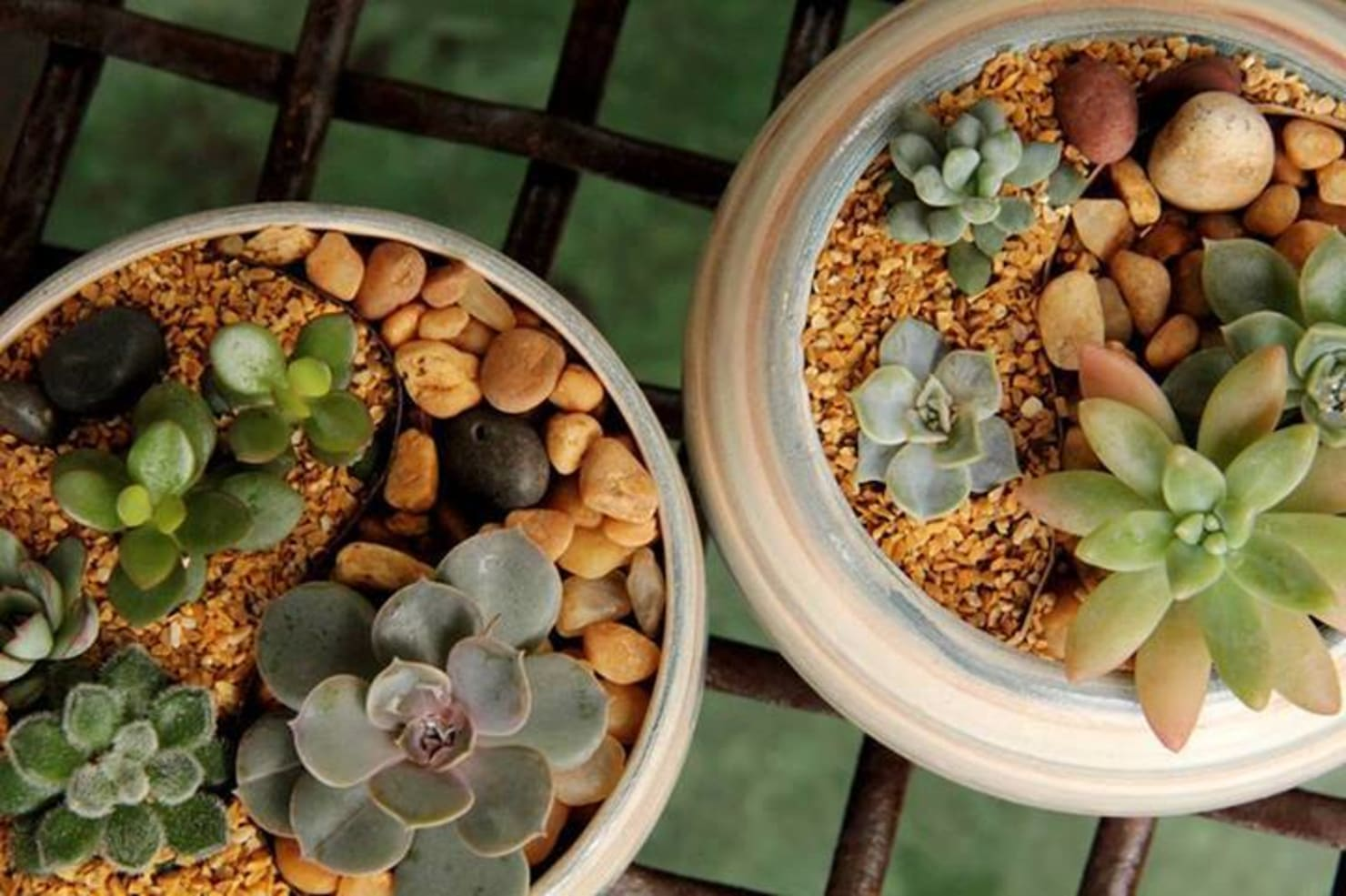 Succulent plants: how to take care of it and decorate the home with it