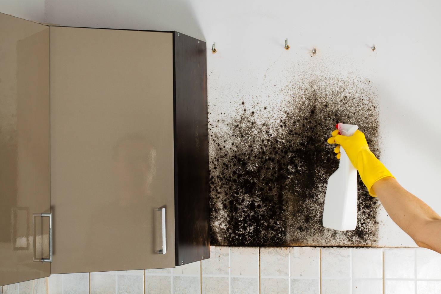 Tutto quello che devi sapere sull'umidità in casa e come eliminarla