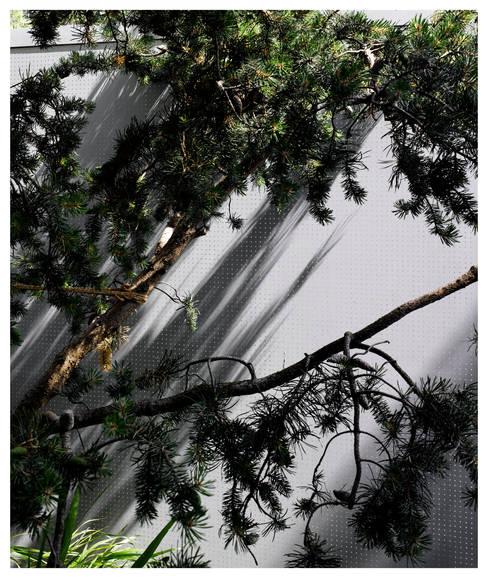 Gianni Botsford Architects:  tarz Bahçe