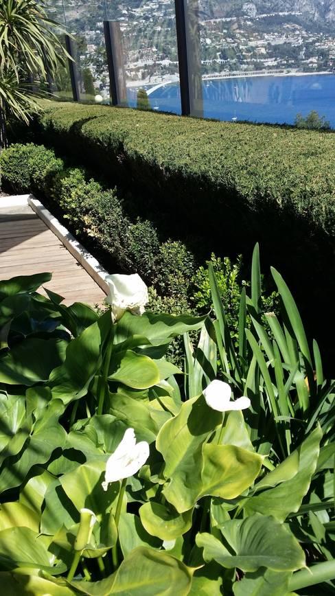 Jardin VIlle Franche Sur Mer: Jardin de style  par Nazarian Espaces Verts