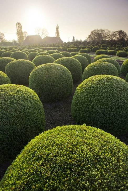 Solitair의  정원