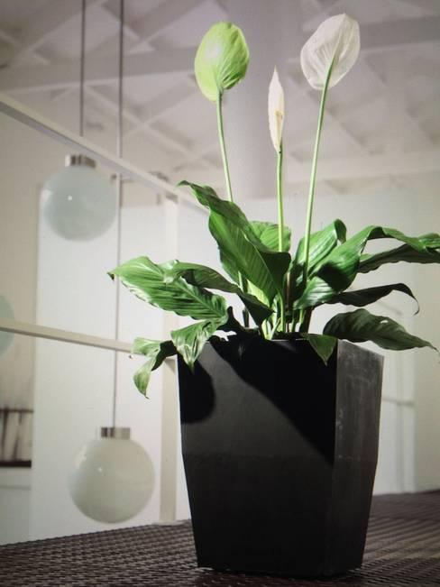 Jardín de estilo  por Viridis Productos Eco Amigables