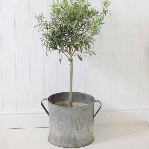 Galvanised metal plant pot:  Garden  by Loop the Loop