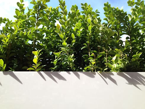 Roof terrace 2:  Terrace by Paul Newman Landscapes