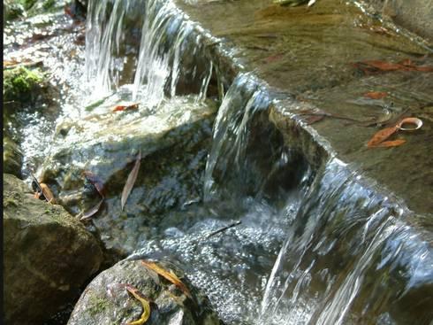 Water Garden: classic Garden by Cool Gardens Landscaping