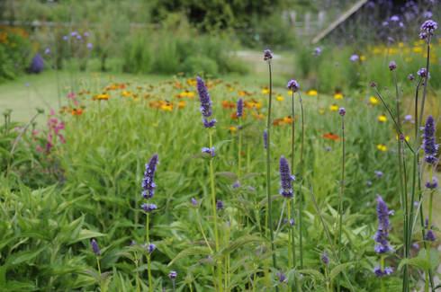 Surrey contemporary country garden: modern Garden by Arthur Road Landscapes