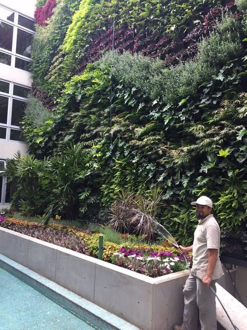 Muro Verde San Ángel: Jardines de estilo moderno por Regenera Mx - Fábrica Ecológica
