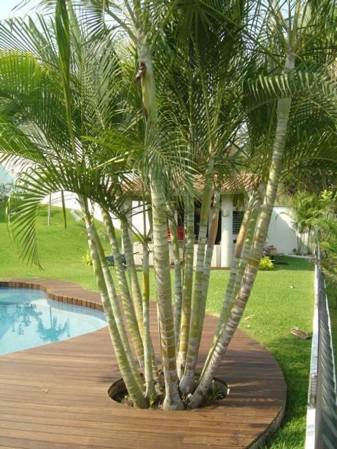 Casa en Club de Golf Santa Fe (Morelos): Paredes y pisos de estilo moderno por Shimada Flooring