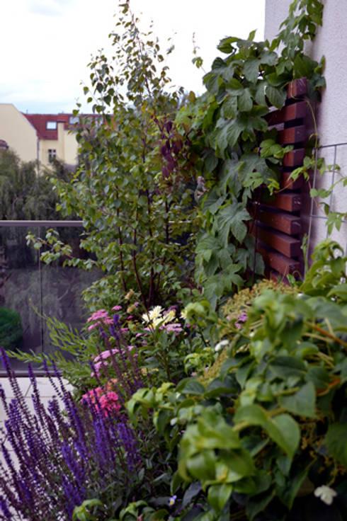bepflanzung sonnige s d dachterrasse berlin von nelka. Black Bedroom Furniture Sets. Home Design Ideas