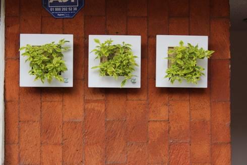 WallFlower para exterior: Balcones y terrazas de estilo moderno por Wallflower Mexico SA de CV