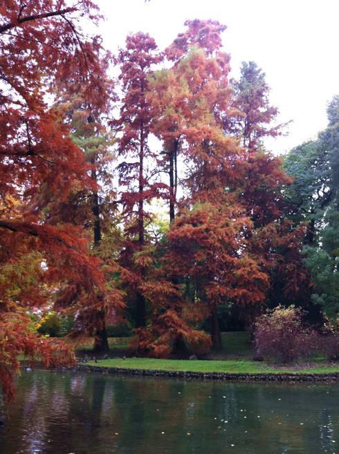 Garden by Dal Ben Giardini