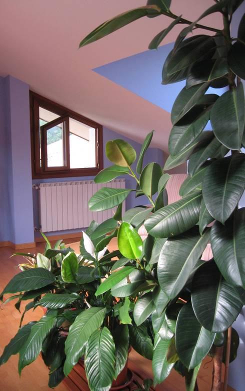 Foto piante d'interno: Studio in stile  di Tiziano Codiferro -  Master Gardener