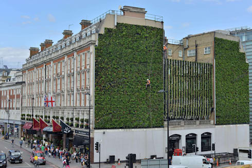 Rubens Hotel Project:  Walls & flooring by Treebox vertical growers