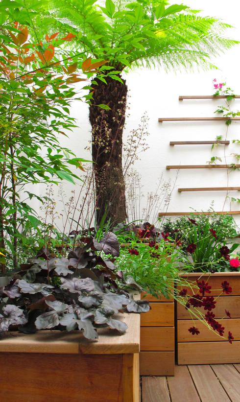 Fenton Roberts Garden Design: modern tarz Bahçe