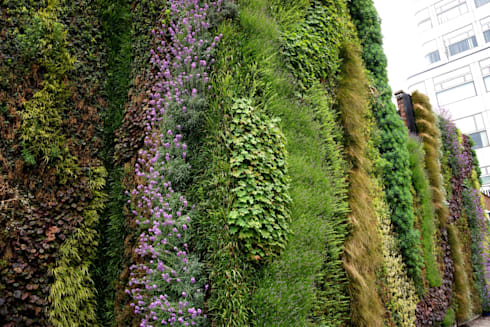 Close up of our living wall at Edgware Road Tube Station:  Walls & flooring by Biotecture
