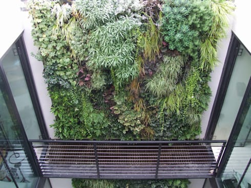 Lightwell, Clapham:  Interior landscaping by Biotecture