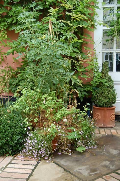 Courtyard Garden:  Garden by Dawn Isaac Garden Design