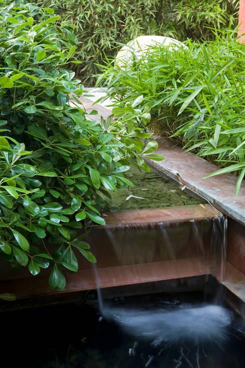 Il giardino delle ninfee di agrisophia natural garden - Giardino delle ninfee ...