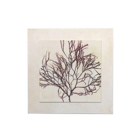 Alga Cladostephus: Paredes y suelos de estilo mediterráneo de LA CASA DE LOS CUADROS
