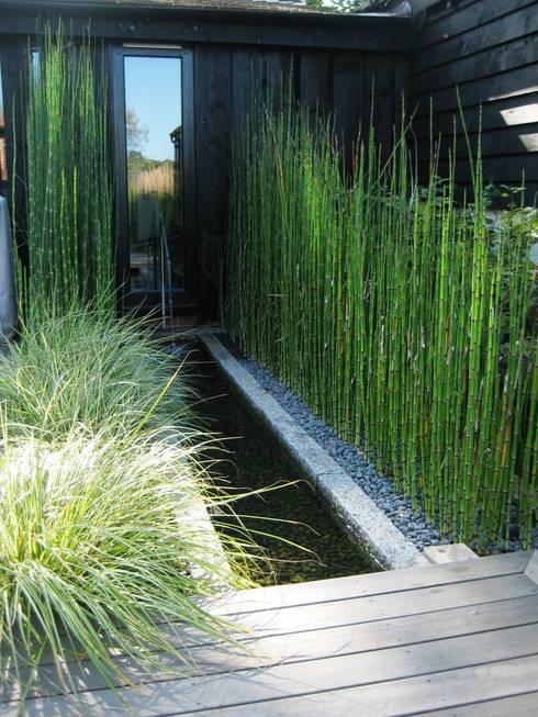 Rill planting: minimalistic Garden by Rae Wilkinson Design Ltd
