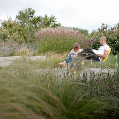 mengsel van planten uit de omgeving en gecultiveerde planten die elkaar versterken: moderne Tuin door Andrew van Egmond (ontwerp van tuin en landschap)