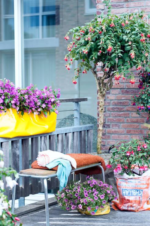 Giardino in stile in stile Moderno di Pflanzenfreude.de