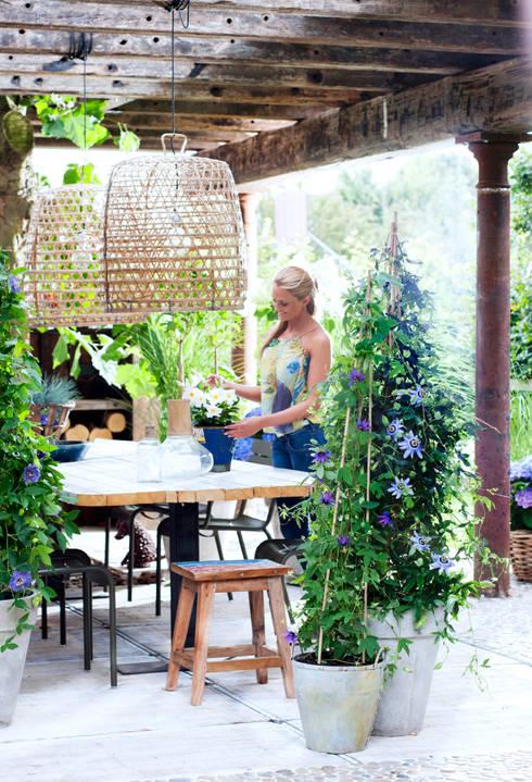 Jardines de estilo rural por Pflanzenfreude.de