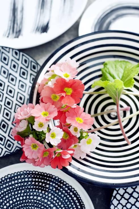 Die Becherprimel - Zimmerpflanze des Monats Februar: ausgefallene Küche von Pflanzenfreude.de