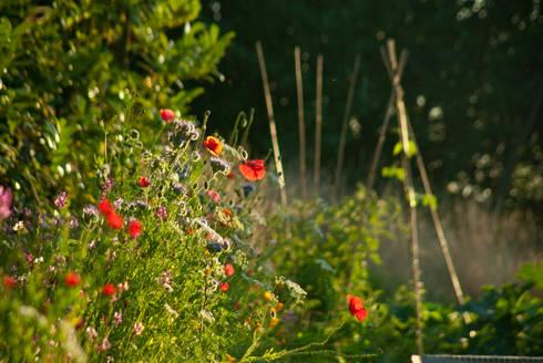 poppies in veg garden: country Garden by Katherine Roper Landscape & Garden Design