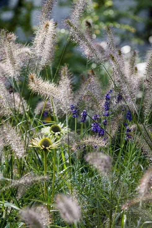 Gräser im Garten: Ein Überblick über Arten, Pflege und Gestaltung
