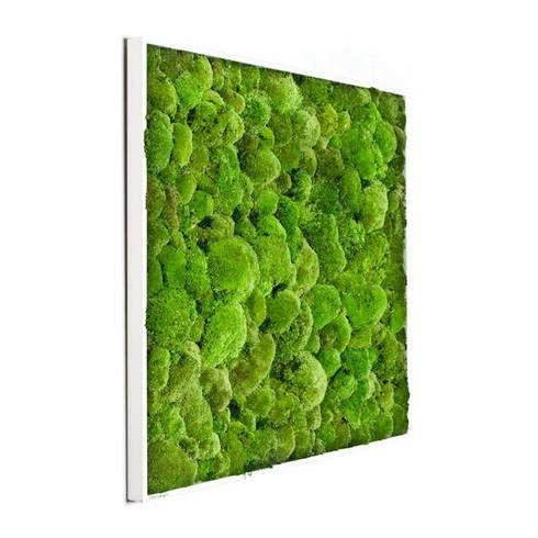 Kugelmoosbild in der Größe 80x80cm:  Raumbegrünung von FlowerArt GmbH | styleGREEN