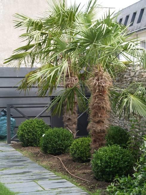 jardin de ville palmiers buis lavandes par so green homify. Black Bedroom Furniture Sets. Home Design Ideas