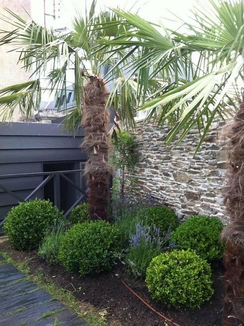 jardin de ville palmiers buis lavandes by so green homify. Black Bedroom Furniture Sets. Home Design Ideas