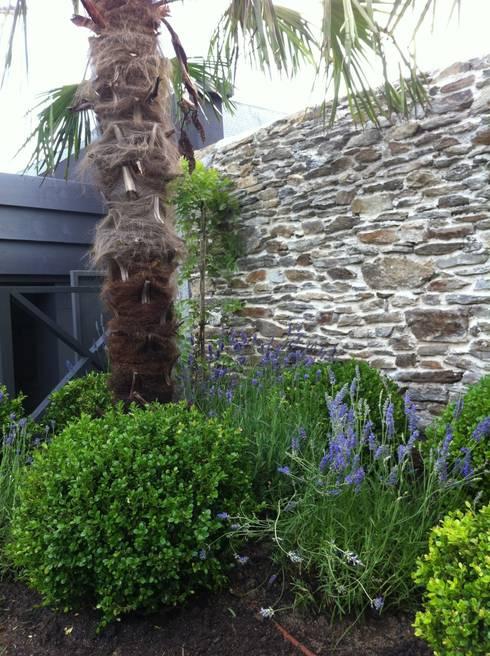 jardin nantes- palmier buis et lavandes: Jardin de style  par SO GREEN
