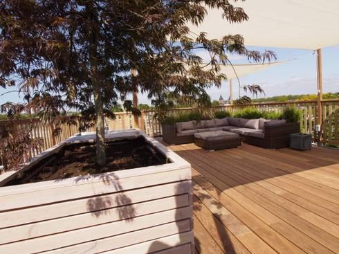 Japanse esdoorn op dakterras: modern Balkon, veranda & terras door ScottishCrown Dakterrassen
