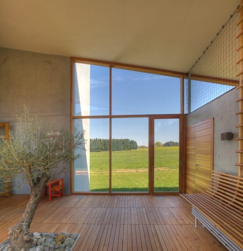 Atrium mit Olivenbaum:  Häuser von kleboth lindinger dollnig