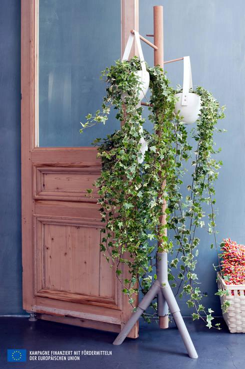 Paesaggio d'interni in stile  di Pflanzenfreude.de