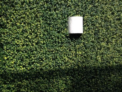 muro verde : Casas de estilo topical por Armatoste studio