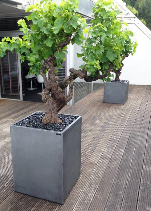 Cube Image'In aspect Zinc: Terrasse de style  par ATELIER SO GREEN
