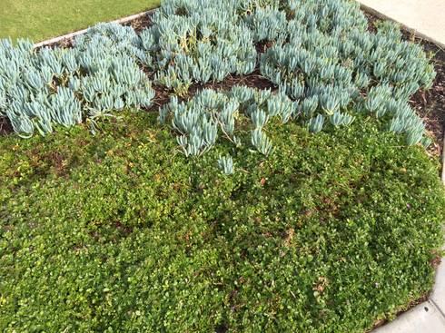 Mullaloo Project: minimalistic Garden by Project Artichoke