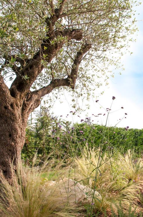 Cerco l'estate tutto l'anno: Giardino in stile  di exTerra | Consulenze ambientali e Design nel verde