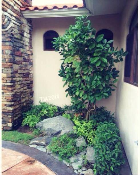 Сады в . Автор – Tropico Jardineria