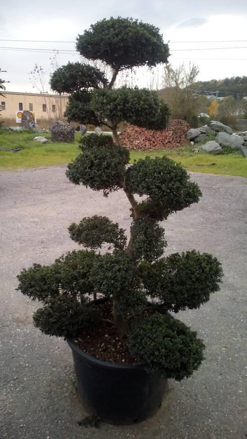 Jardines de estilo  por CanlıBahçe Fidancılık