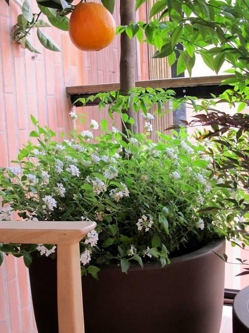 Frutales en tu terraza: Terrazas de estilo  de Asilvestrada