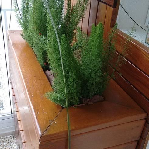 Floreira: Varanda, alpendre e terraço  por Amaria Gonçalves - Design Paisagismo