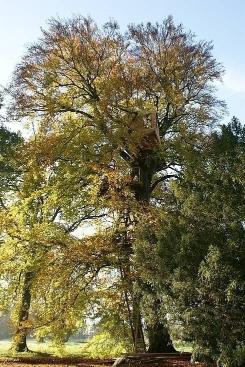 Luftschlösser Baumhausprojekte _ Baumhaus im Schlosspark: landhausstil Garten von Luftschlösser