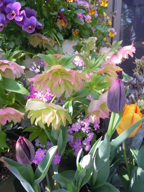 印象派の庭: Green Team  coが手掛けた庭です。