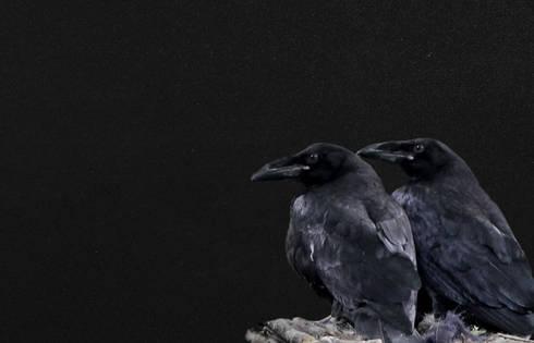 Nero Assoluto Granit mythos granit nero assoluto by wieland naturstein gmbh homify